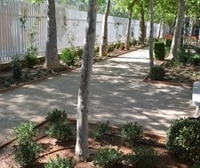 Renovació i ordenació de la jardineria i la il·luminació av. Generalitat Valenciana