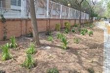 Renovació integral de l'enjardinament davant l'escola Baladre